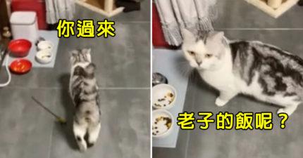 影/貪吃貓擺臭臉「跟主人討宵夜」 暴怒「表情包」讓貓奴融化