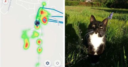 她在貓身上裝追蹤器 發現貓皇每天「去5個不同房子」做的事太心機!