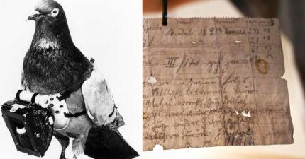 110年後抓包「戰鬥飛鴿」傳書失敗!機密內容曝光...網:差點改寫歷史