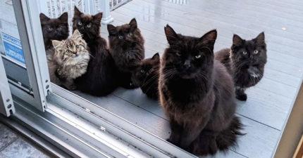 好心餵浪貓 幾週後「1隻→7隻」全家擋門口:人類~養我們!