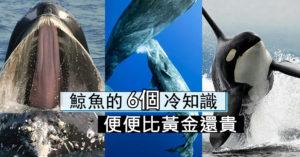 6個「鯨魚專屬」的驚人冷知識 牠的「便便」比黃金還貴!