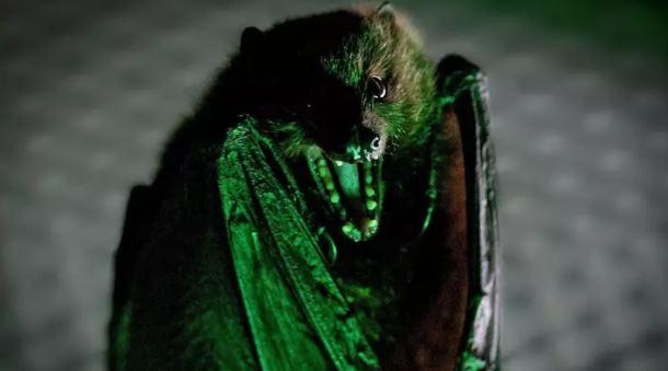 人類多學學!最新研究:發現蝙蝠生病會「自主隔離」