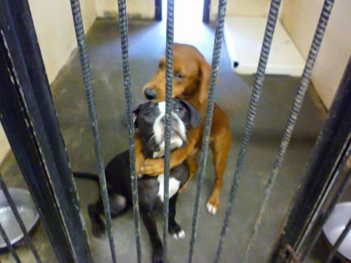 心碎道別!狗姐妹沒人領養「被迫離開世界」一張照片改變命運