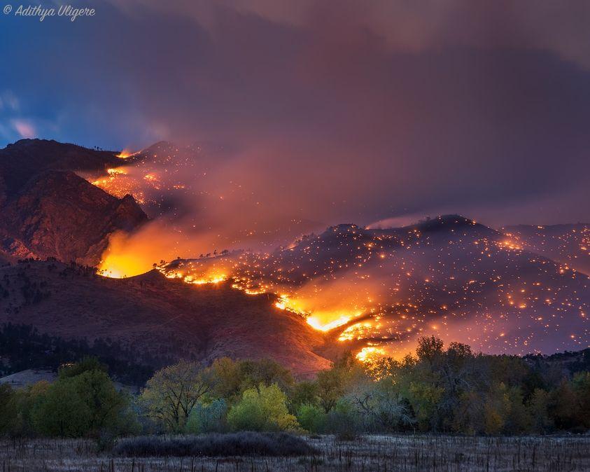 不能帶寵物「逃出森林大火」 哭到一半發現「牠們回來了」!