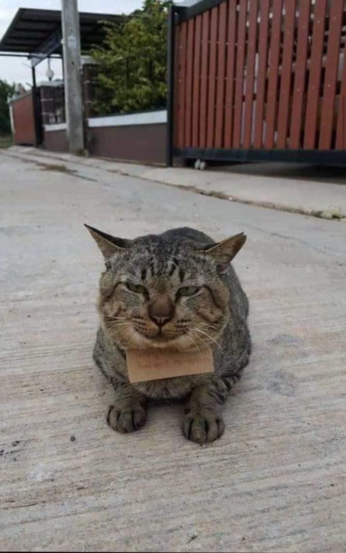 貓皇離家探險3天!帶著「紙條」回家 奴才仔細看:錢包要哭了