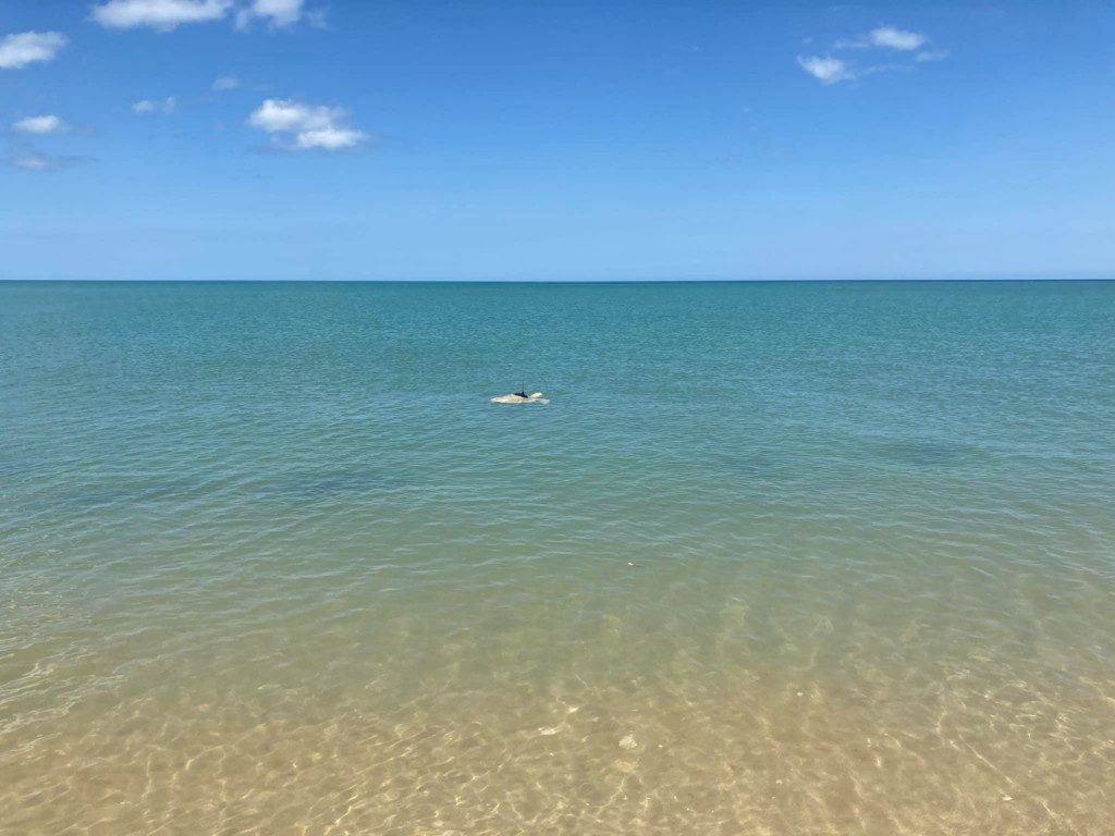 因魚網失去腳...「截肢海龜」不放棄復健 5年後成功重返大海:自由了!
