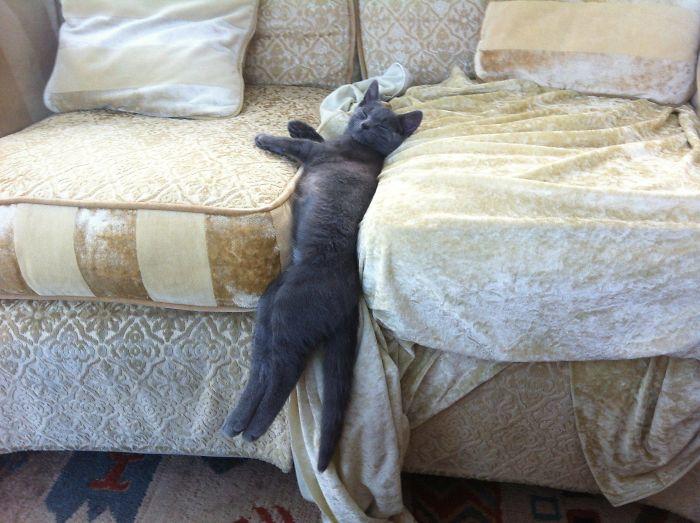 22隻「有床偏不睡」的超難搞貓皇 買新床進貢結果跑去孵雞蛋
