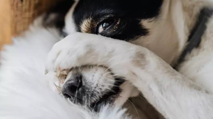 每天聞到臭屁味!孕婦逼「狗狗去治療」一個月後發現錯怪毛孩