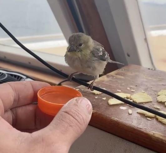 溫柔哥順手撈落水鳥「交到跨物種好友」 窩頭頂互動太溫馨❤