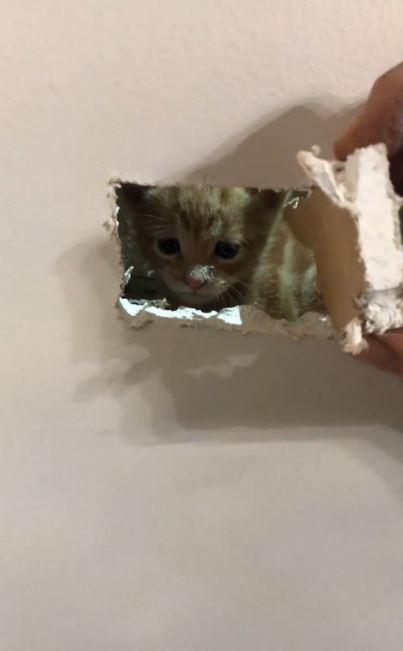 屋內發出怪聲!消防員用「救命神器」找貓咪過程超感人
