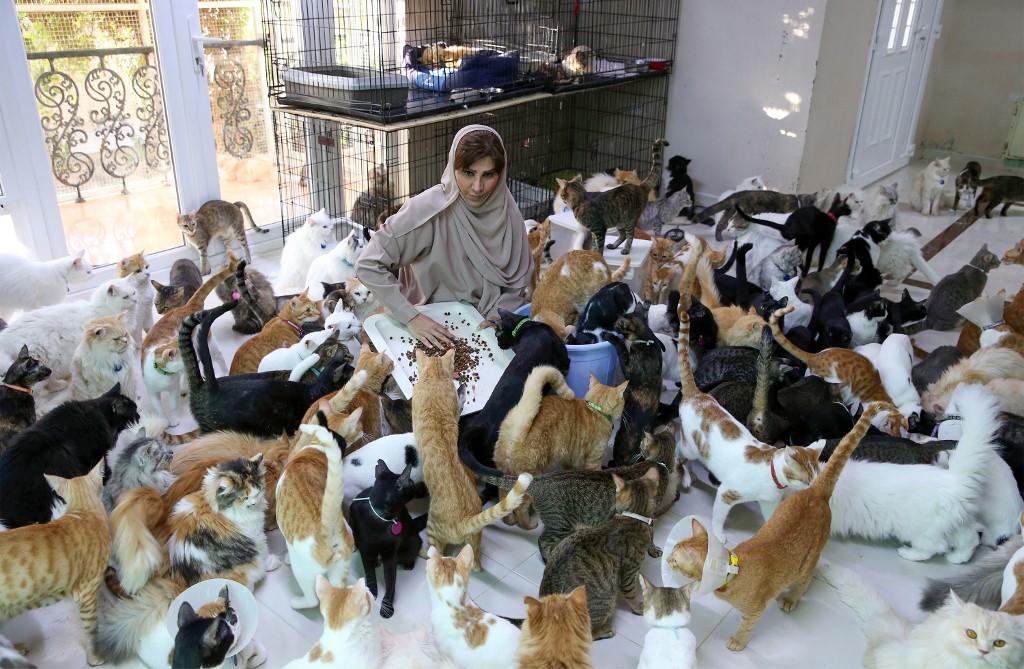 家裡住480隻貓!月砸22萬「買房給浪浪住」:比男友還有用
