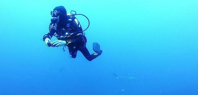潛水見整面「鯊魚牆」200隻風暴式圍繞!她淡定:還是水母恐怖