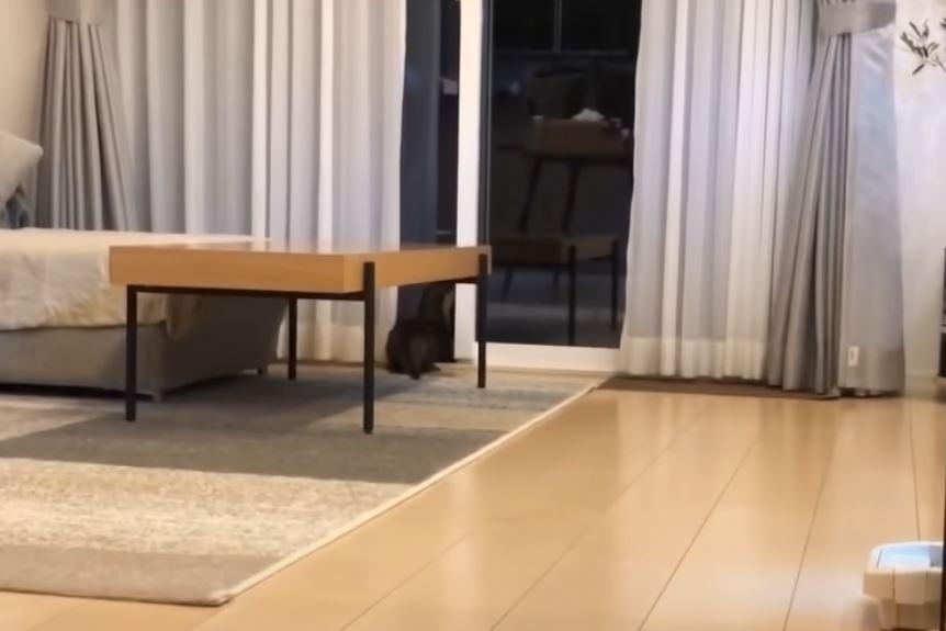 影/好友貓咪不見了!水獺用「地毯式搜尋」找到那一刻讓人融化