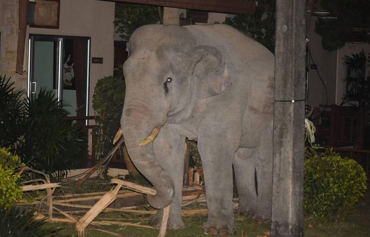 大象闖民宅覓食!小貓「霸氣驅趕」專業保全都輸牠