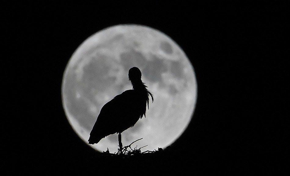 超罕見「藍月」二戰後首次現身 高掛全球比太陽還耀眼