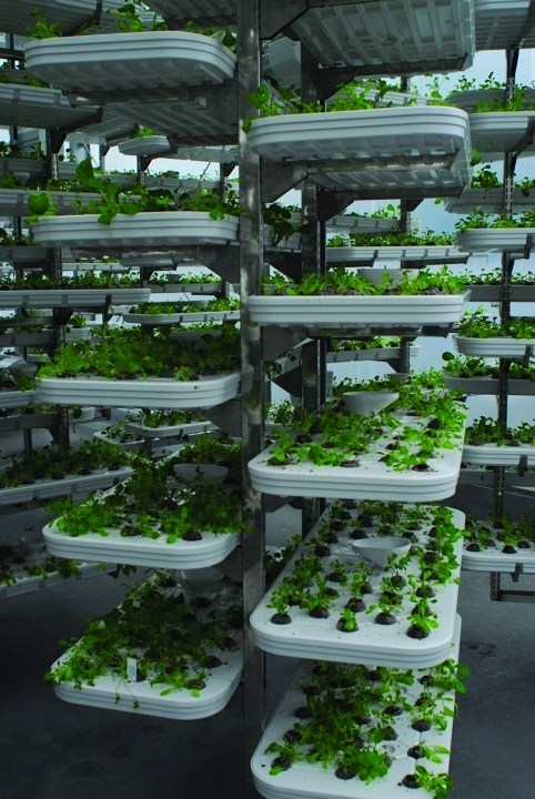 世界第一座「機器人農場」每天產3萬株生菜 還能省98%水!