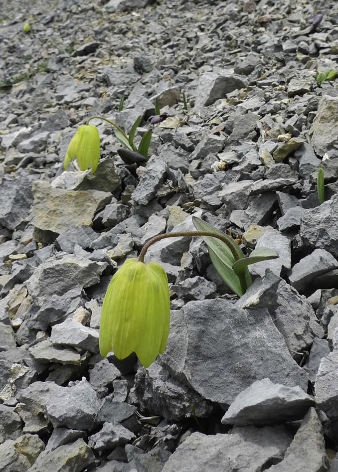 植物演化出「消失偽裝絕技」 專家驚訝發現:是被人類影響!