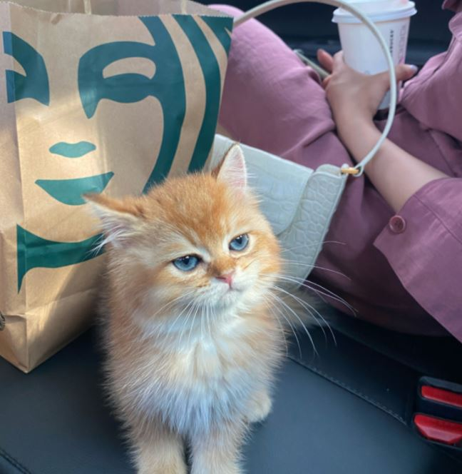 小橘貓「被收編」卻一臉不屑 主人「用罐罐威脅」反被氣瘋