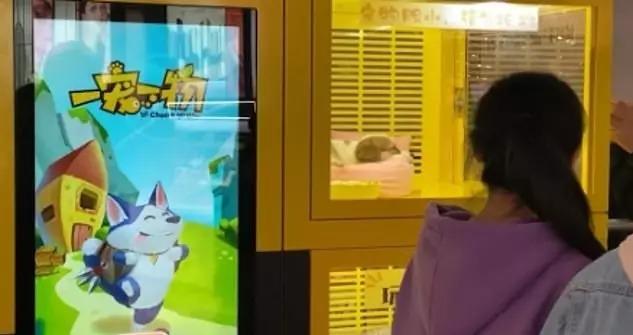 寵物「被當獎品兌換」放夾娃娃機 毛孩「機器裡奄奄一息」惹眾怒!