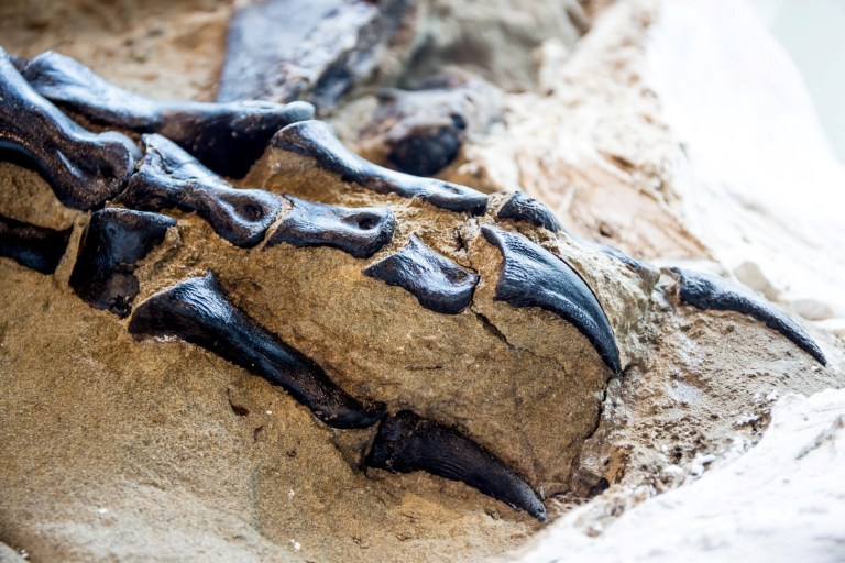 世界第一具完整暴龍骨骼!清晰「牙齒痕」揭:6700萬年前「決鬥下場」