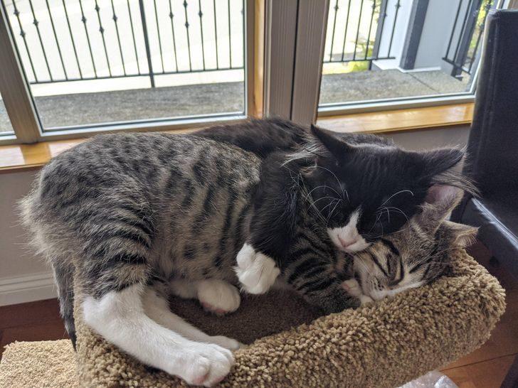 16隻「終於等到家」幸福毛孩 髒髒貓變仙女還長出整坨「貓松阪」