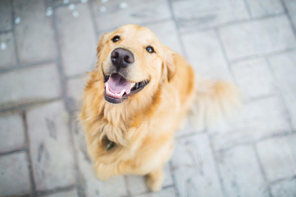 狗是人類最古老的朋友