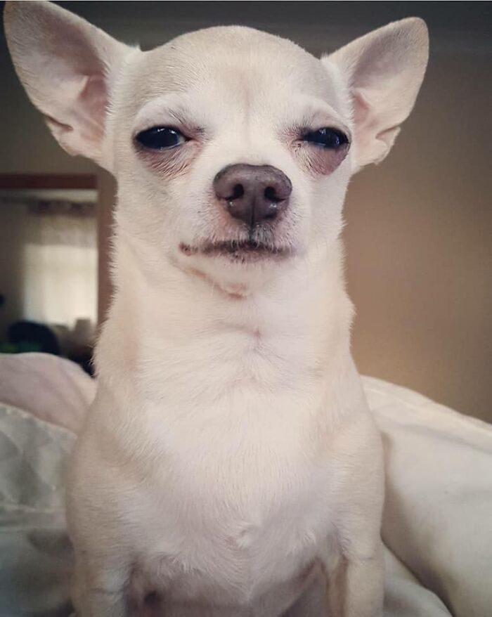 20隻「狗不滿意」爆笑照 用「爆氣老媽臉」迎接晚歸主人