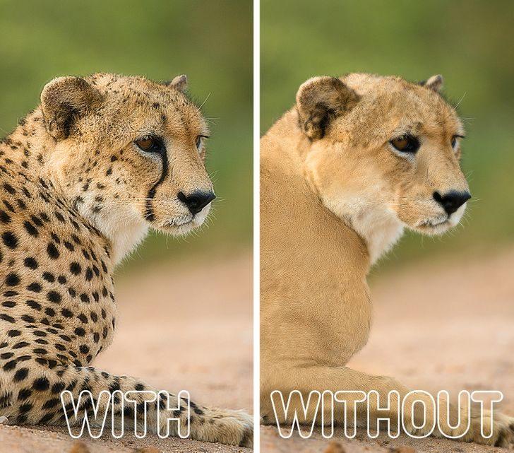 如果動物「失去特徵」會怎樣? 長頸鹿超詭異膚色讓人想報警