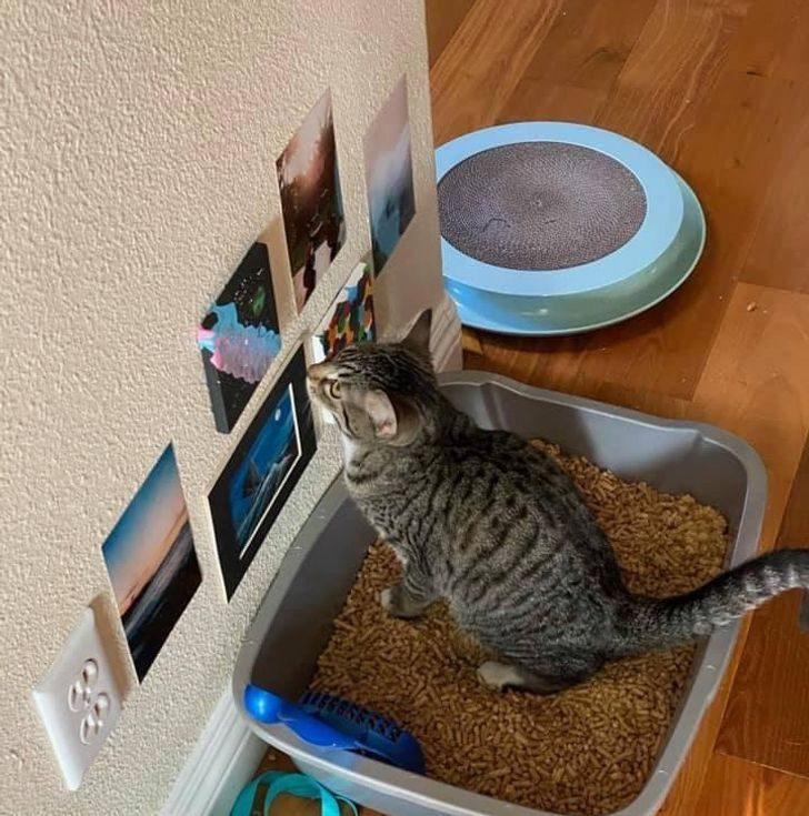 18個「人類跟毛孩的愛」勝過一切的證明 「貓咪廁所」掛滿風景照!
