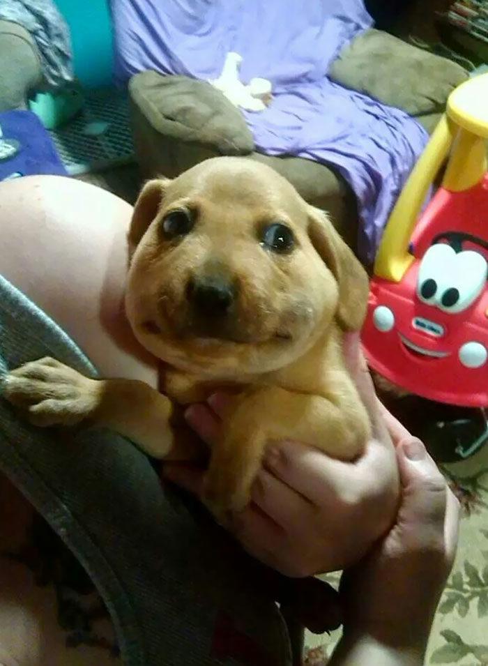 不准笑!20張「誤食蜜蜂後」像卡通人物的狗 胖柴讓你笑得很內疚