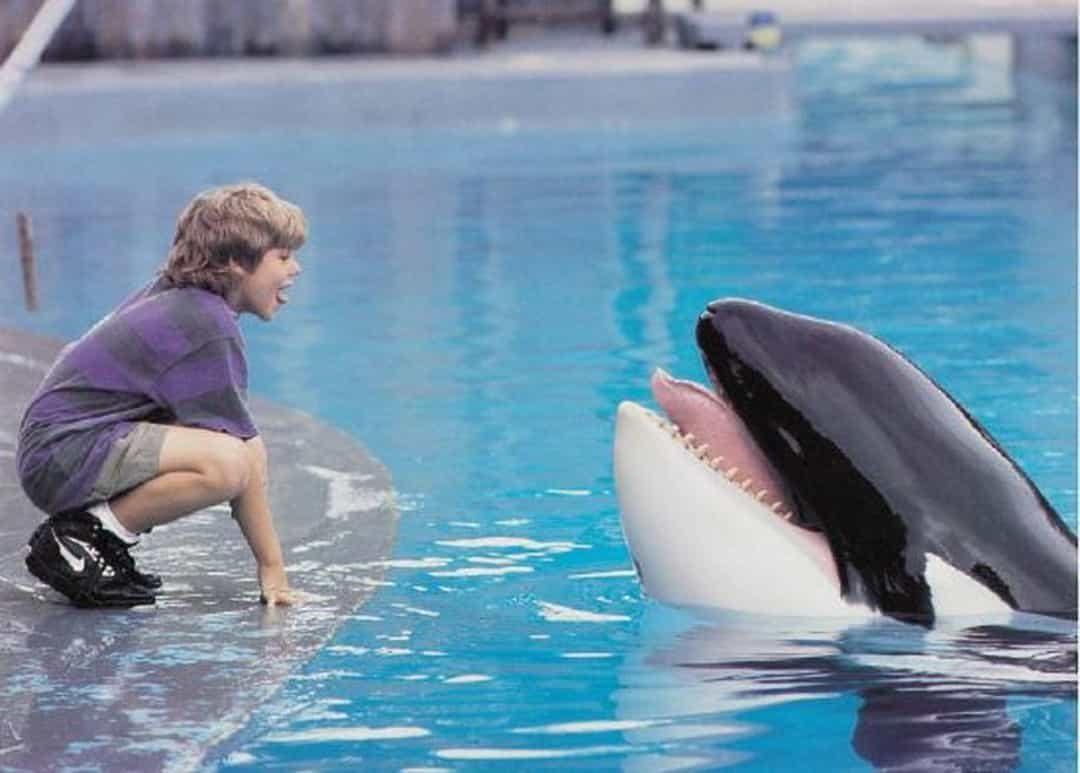 跟海豚一起游泳不是夢!動畫公司超仿真「人工鯊魚」陪你玩