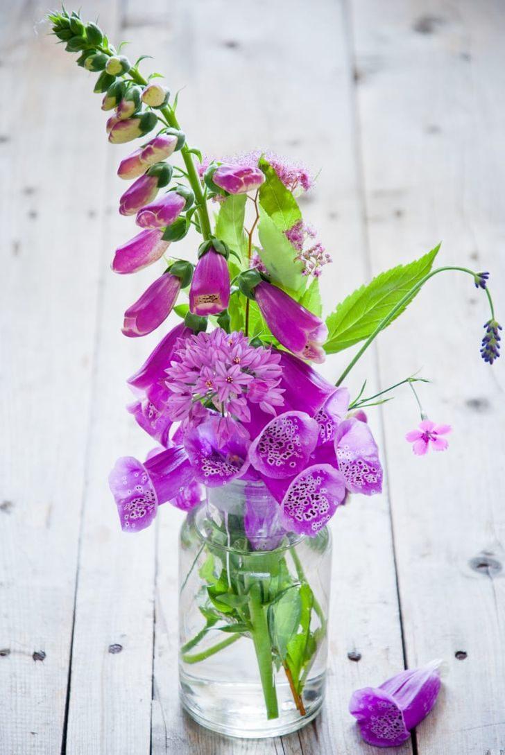 想在「家裡種植物」要注意!這10種漂亮植物「反而會害到你」