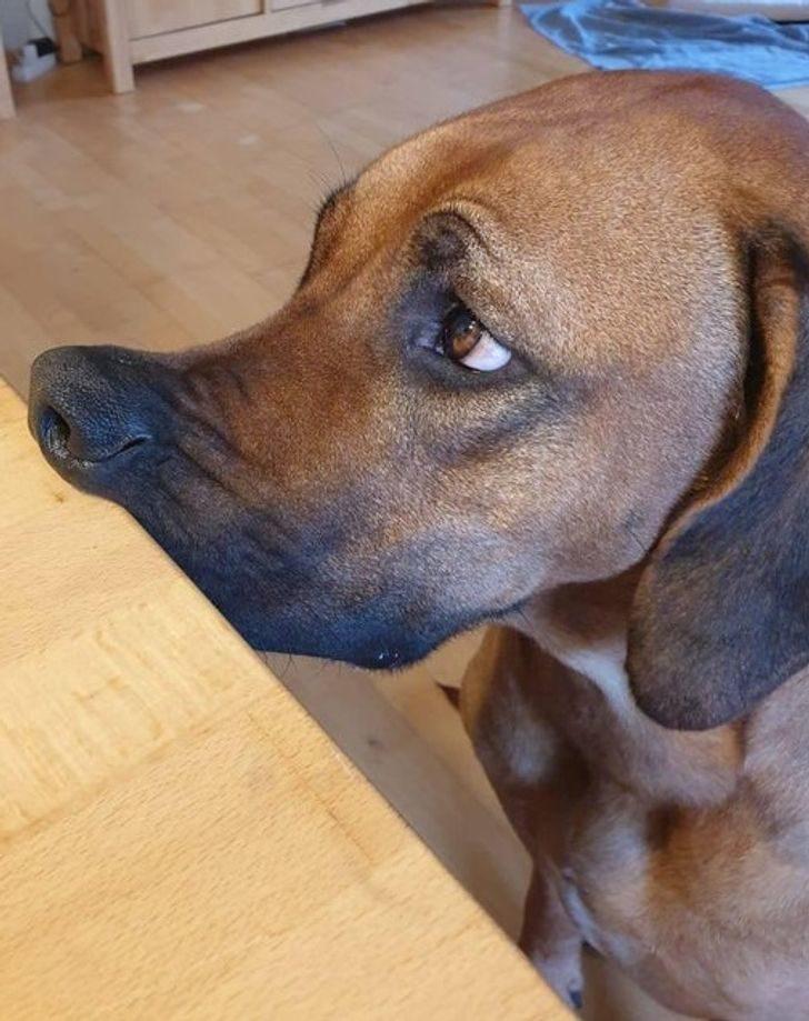 24隻讓你「忍不住姨母笑」的毛孩 萌狗聽到沒散步直接變樹懶