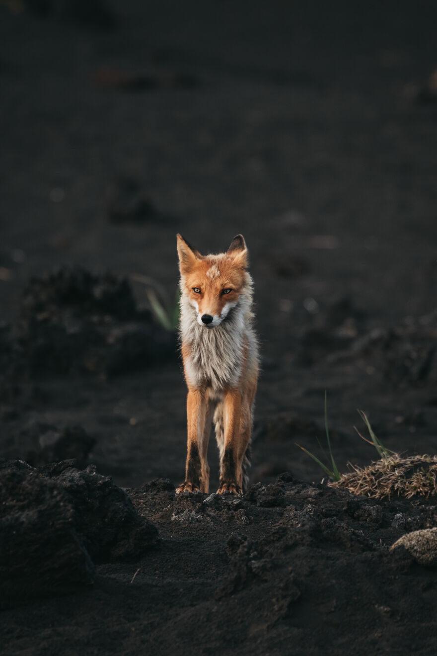 2020年最「震撼人心」動物攝影大賽 汪星人:偶會陪你到最後