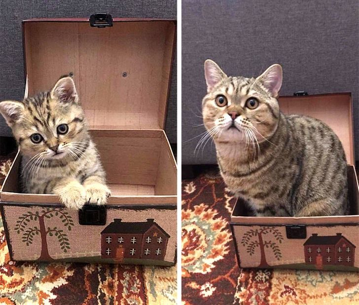 14件讓你暖到發笑的「沒改變的事」 箱子變小...但貓卻沒變!