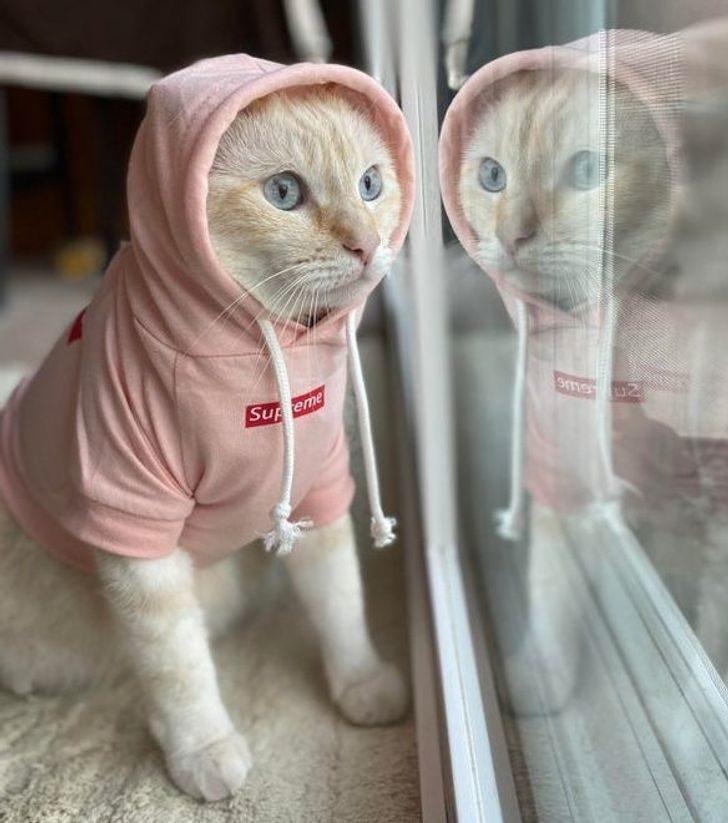 又愛又恨的貓