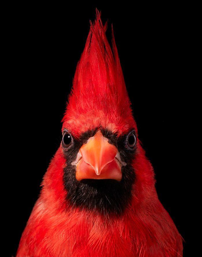 快要從世界消失!25種「世界極稀有鳥類」 牠一身「貴婦全黑look」太潮