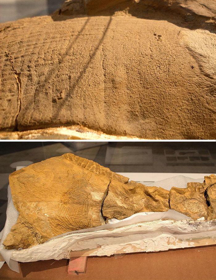 18個「考古學家會落淚」的珍奇化石...連「畸形雙頭生物」都有!