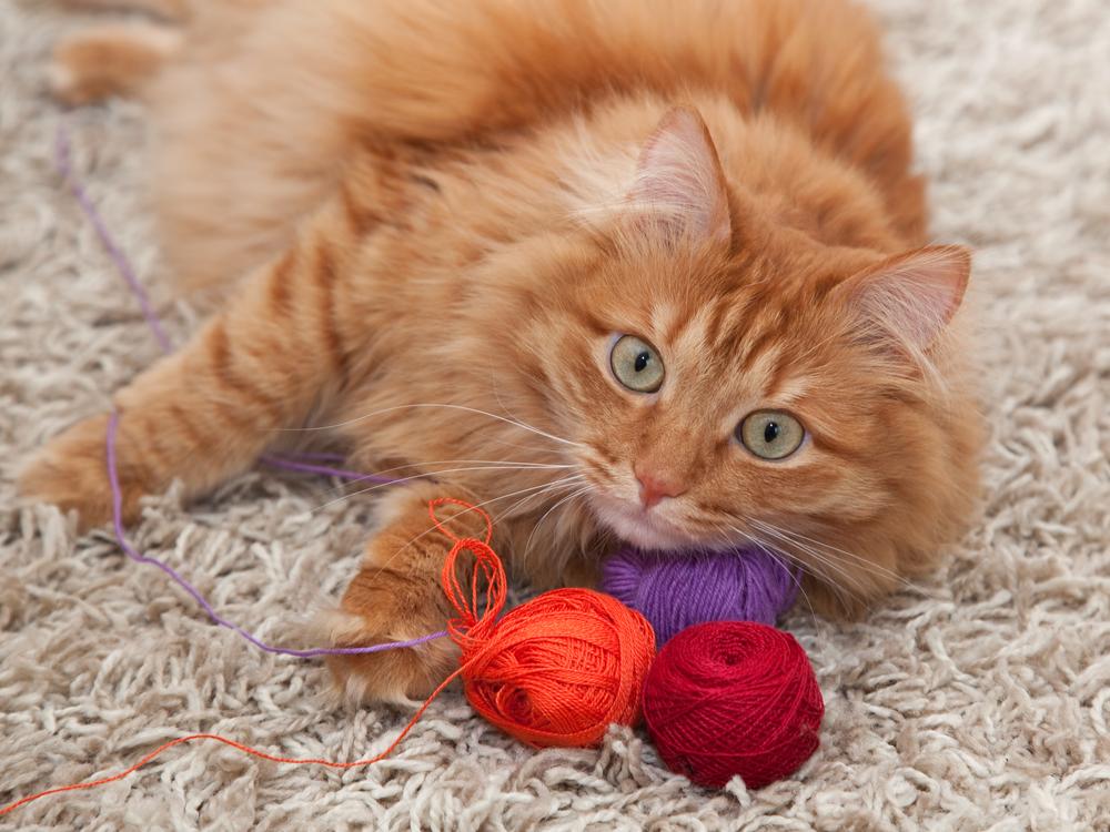 獸醫警告13件「不該對貓做」的事 「用手跟貓玩」絕對要避免!