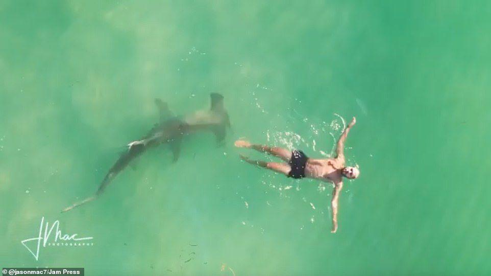 空拍机鲨鱼双髻鲨