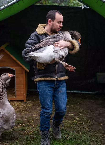 太孤單...獨居男養「寵物鵝」當自己孩子 現在卻被政府「迫分離」