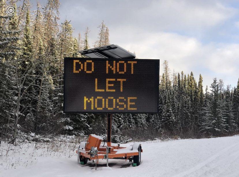 路邊告示「不要讓麋鹿舔你車」 全因牠們太沉迷「湖的味道」!