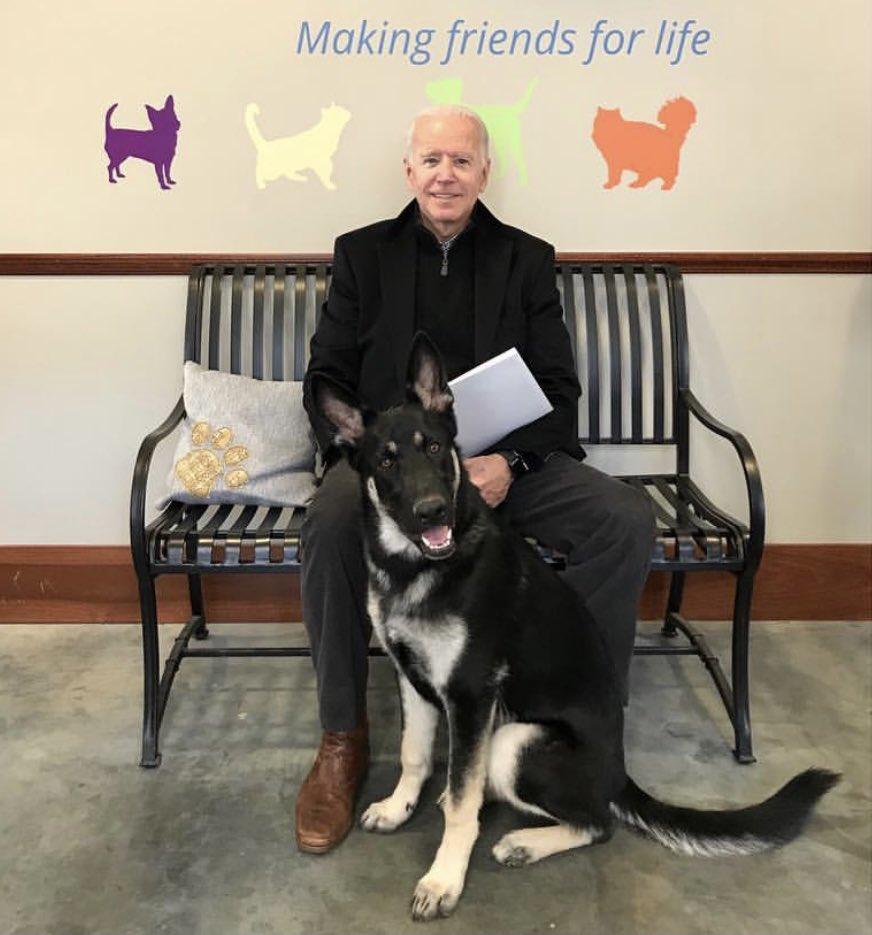 最勵志狗生!從「收容所→美國第一狗狗」...拜登帶愛犬一起住白宮!