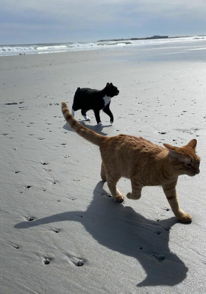聽海哭的聲音!萌貓「第一次看海」大擺臭臉「真相」讓人笑翻