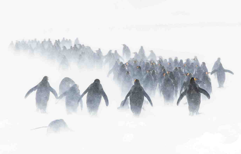 攝影獎揭露海洋「最真實模樣」 南北極「小碎冰」讓人類都慚愧