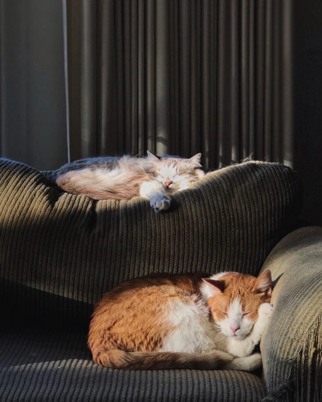 為租房與毛孩分離?議員提案房東「禁房客養寵物」違法!