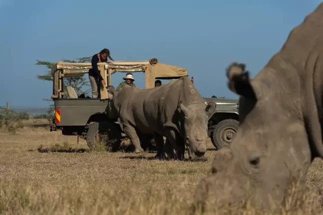地表只剩「2頭白犀牛」...武裝部隊「24hr堅守」怕牠們消失