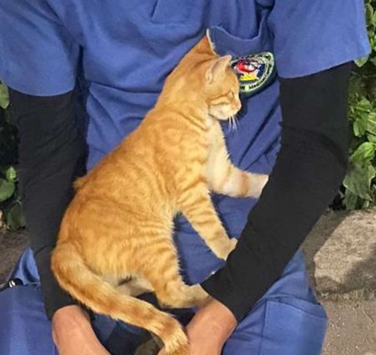 連續值班超累...護理員休息時「小橘貓」撒嬌安慰:幫你重新充滿電!