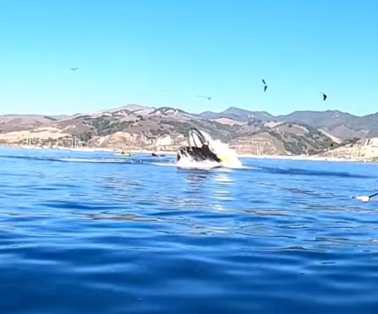 影/划船賞鯨被鯨魚「一口吞」 意外發生瞬間讓人嚇到腿軟
