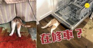 比喬巴還會躲!自認「半個躲貓貓達人」的小怪貓